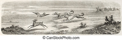Gazelle hunting in Great Salt Desert, Persia, with falcon...