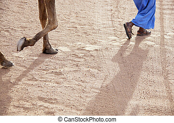 Legs of a walking man with dromedary. - Legs of a walking...