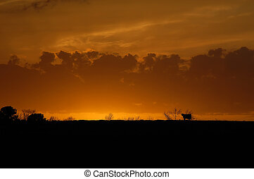 Agriculture Days End - Glorious sunset shows silhouette of...