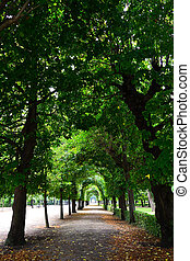 Branches of trees as an arch - Sidewalk and branches of...