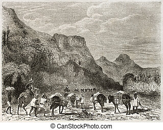 Cuban landscape, old illustration. Created by Huet after...