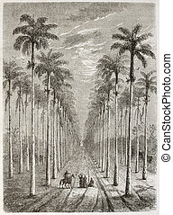 Palm avenue in front of Cuban house. Created by Berard,...
