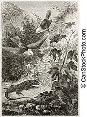 Galapagos fauna - Reptil and birds of Galapagos islands....