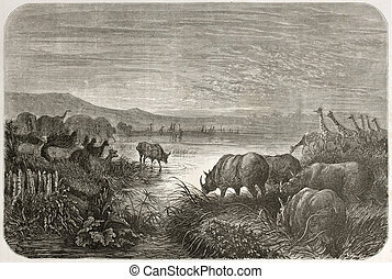Watering place - old illustration of watering at African...