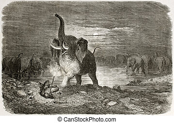 Elephant attacking - Old illustration of an elephant...