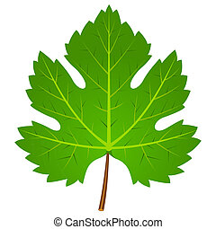 Green Wine Leaf - Illustration of wine leaf isolated on...