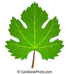Green Wine Leaf - Illustration of wine leaf isolated on...