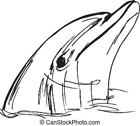 Sketch of dolphin face. vector illustration