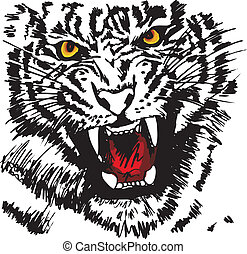 Sketch of white tiger Vector illustration