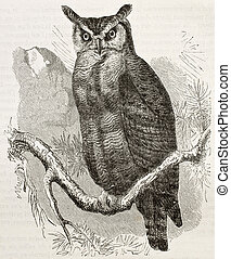 Great Horned-owl old illustration (Bubo virginianus), also...