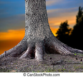 Rooted tree - Big tree firmly rooted in the forest, with...