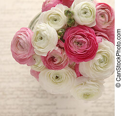 pink and white ranunculus on script - bouquet of spring...