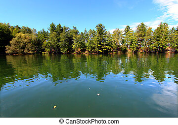 Lake Minocqua Wisconsin - Pine trees along the shoreline of...
