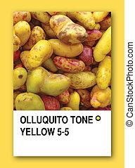 olluquito, tono,  Color, muestra, amarillo, diseño
