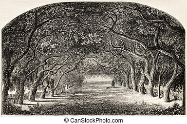 Chestnut walk - Old illustration of chestnut walk Created by...