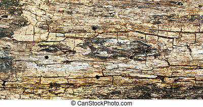 Grunge of texture wood background