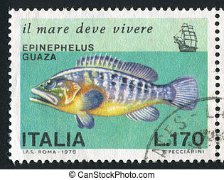 Giant Grouper - ITALY - CIRCA 1978: stamp printed by Italy,...