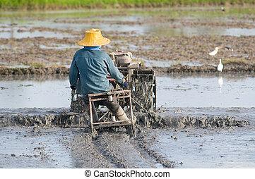 Thai farmer at the rice field