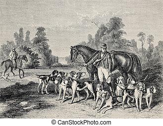 Hunting dog pack - Antique illustration of hunting dog...
