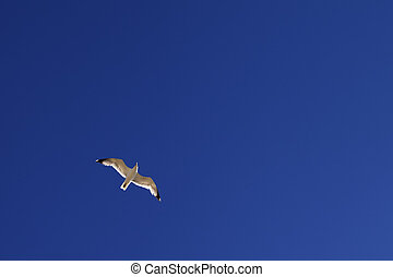 Seagull hover in blue sky