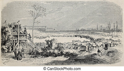 Montpellier horse racing - Antique illustration of horse...