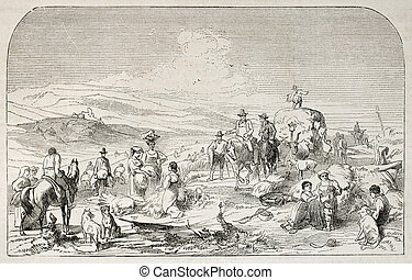 Harvesting - Antique illustration of harvesting scene in...