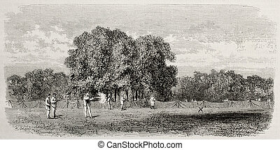 Portici wood hunting reserve - Old illustraqtion of Portici...