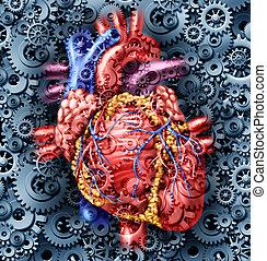 humano, corazón, salud