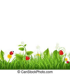 herbe, frontière, à, coccinelle, et, feuille
