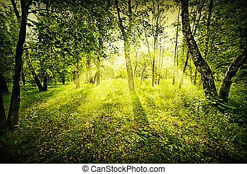 Fantasy deep forest - Fantasy green deep forest on summer...