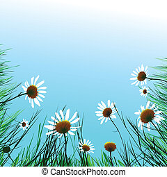 Camomiles - Floral background camomile flower. Vector...
