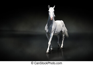 White horse isolated on black - Photo of a white horse...