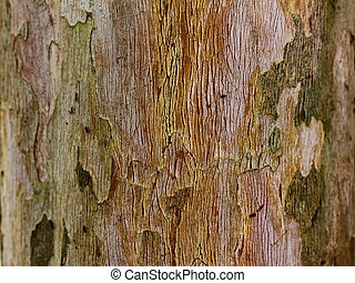Tree bark - The bark of a tree with ants Great for...