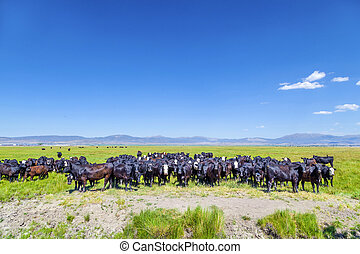 group of cows grazing on the meadow