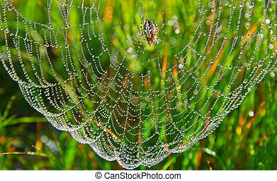 spider web with some water droplets early in the morning