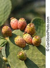 fico dindia - frutto tipico dei paesi del sud, la sua buccia...