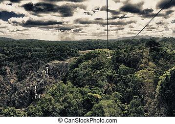 Vegetation of Daintree Forest in Queensland - Vegetation of...