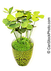 Green plant - Bright green plant in pot with grass