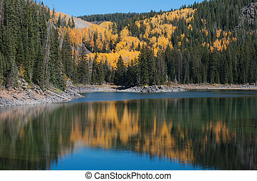 Autumn on the Grand Mesa - Golden aspens reflected in a lake...