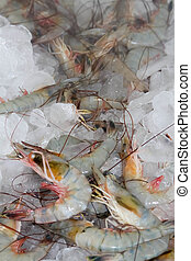 Shrimp on ice, fresh from the Florida Gulf Coast.
