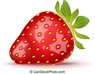 Strawberry - Ripe strawberry isolated on white Vector...