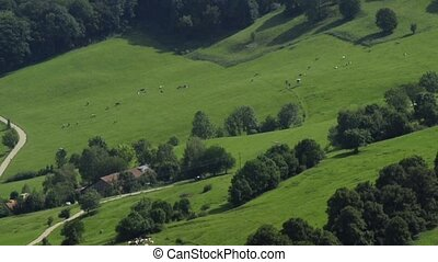 bird eye`s view to pastures