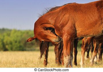 Young colt bent