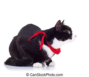 black and white cat wearing a red scarf