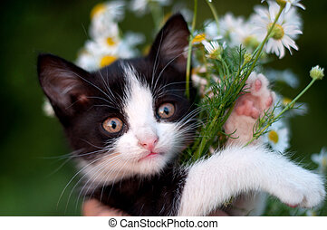 funny kitten with a bouquet of daisies