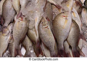 pez, arregla, cesta, Caballas, mariscos, Mercado