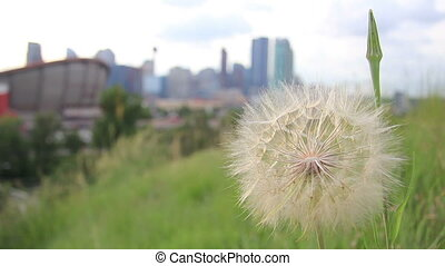 calgary city scenic dandelion rack - Scenic shot of downtown...