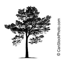 Tree isolated on the white background