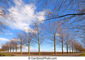 Diverging road and line of trees under a blue cloudy sky