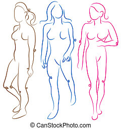 Female Body Shapes Set - An image of a female body shapes...